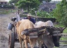 Transport (4).jpg